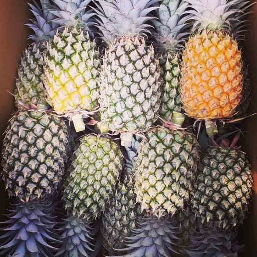The Secret Ingredient : Phuket Pineapples